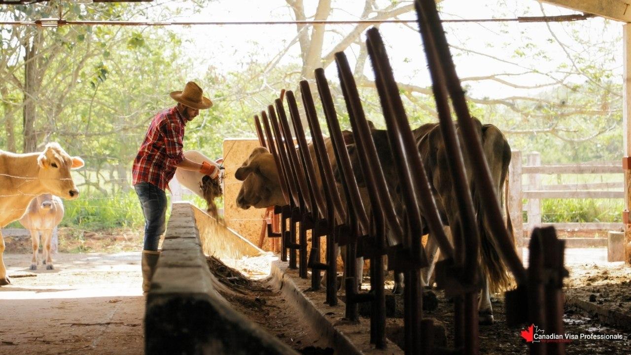 Canadian Visa Professionals - Farms